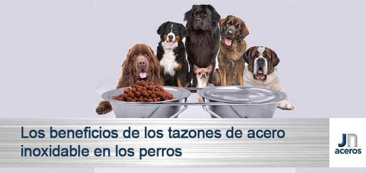 Los beneficios de los tazones de acero inoxidable en los perros